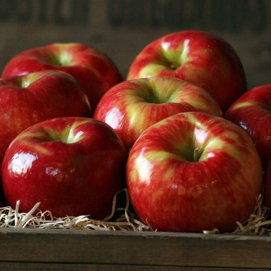 Fruit producers grateful for good apple crop | The Antrim Review